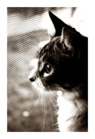 Longing for something else by cat-lovers