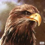 Eagle Sketch by ElConsigliere