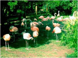 Flamingos by estherissuperkoo