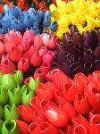 Tulips from Amsterdam by raygirl