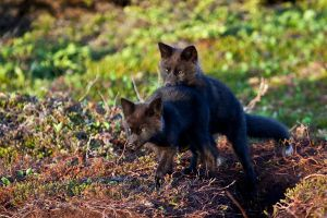 Baby Foxes - Moments Ago 10 by Witch-Dr-Tim