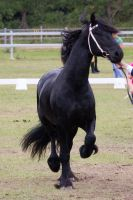 STOCK - Friesian Show 2012-132 by fillyrox