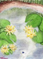 Water Lily by Adalaire