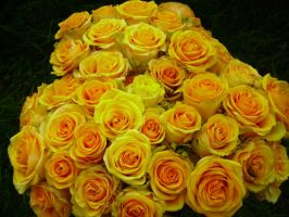 Flora Part 8 - Yellow Roses by ofeliq