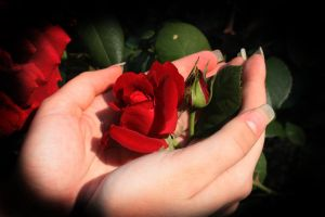 Rose in her hands... by Juliana-Mierzejewska