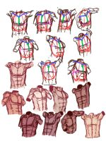 Sexy abs studies/ male torso tutorial thingy by sarahpenny10
