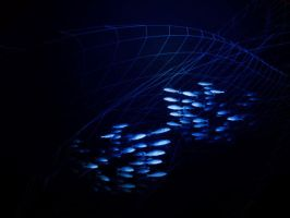 Fishes in The Net by zamir