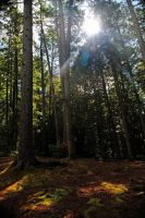 Forest Stock 5 by savvy-stock