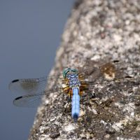 DragonFly II by cmykchicago