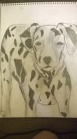 dalmation by ccunniffe