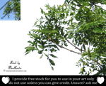 Branches png by TinaLouiseUk