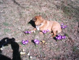 my dog and flowers by 1wolfgir1