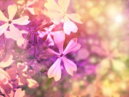 Among the Wildflowers by Morna
