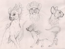 Mischling cat breed concept by modifiedMONSTER