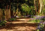 Woodland Path - Knock Wood by james-cramp-art