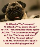 Pug Quote of the Week by Ask-The-Pug
