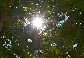 Sun Through Trees 1 by wolfgal04
