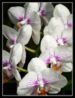 orchid reflections by ariseandrejoice