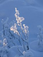 Beautiful cold nature by fotojenny