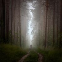 shadows of forest by Alshain4
