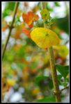 Tropical Autumn by fongsaunder