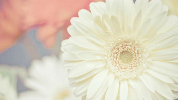 Wallpaper Flower :33 by Tutosunicons