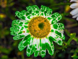 Green drops on white by Mackingster