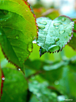 Raindrop leave by TheLarii