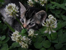 Among The Clovers by Hudsoniel