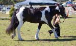 STOCK - Canungra Show 2012 001 by fillyrox