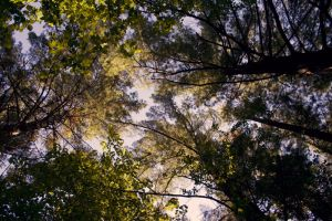 canopy light by FigoTheCat