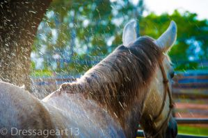 water spray by dressageart13