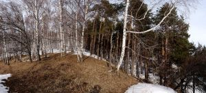 Mixed forest by voldemometr