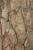 Tree Bast Textures 8 by steppelandstock