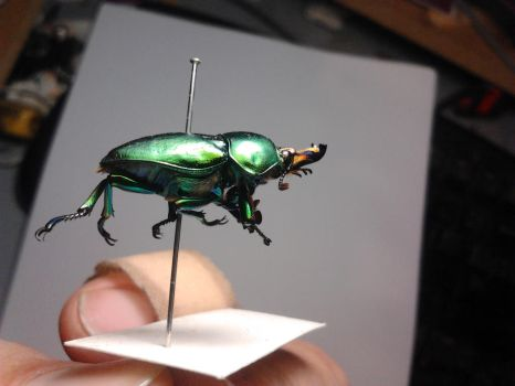 Golden Green Stag Beetle by Drhoz