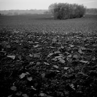 soil by korrox
