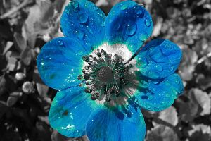 Blue flower by Jessica-Renea