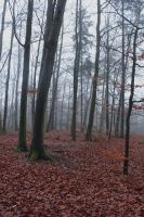 Foggy Forest 02 by sacral-stock