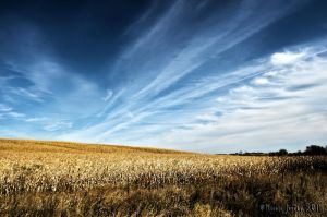Skies of Blue,Fields of Gold by bacardi870