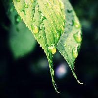raindrops IV by itsRisingLove