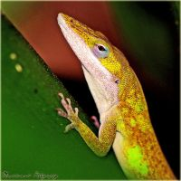 Green Anole by Monochrome5