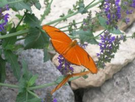 Orange Butterfly by mmad-sscientist