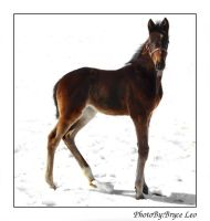 Silky's 2007 Filly by likwidoxigen