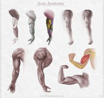 Arm Anatomy by Azot2015