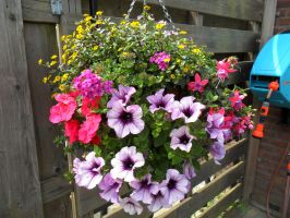 My own made Hanging Basket by PinkCollour