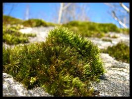 Green Moss by MKlver