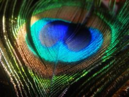 Peacock Feathers stock 1 by Leaush