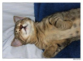 what do cats dream off by Cats-Paw