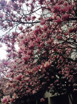 Pretty In Pink Tree by EndlessMuse