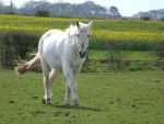White Horse 4 by TimeWizardStock